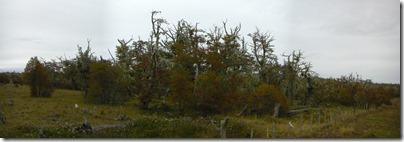 De bosques en aparente agonía...