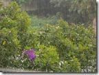 Lluvia y más lluvia.