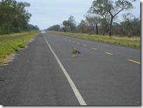 Fue lo más triste que vi en el camino. Un zorrito que miraba cómo los buitres se comían a su amigo. :(