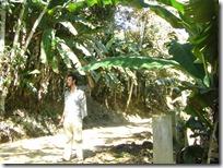 Perdido entre las plantaciones de plátanos que cubrían los cerros.