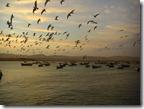 Aves y botes al atardecer