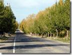 Carreteras bordeadas de árboles